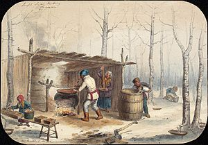 Maple syrup - Sugar Making in Montreal, October 1852