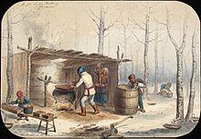 Пензенский кленовый сироп и первые российские кленовары