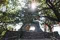 Sumoto Castle in 2013-9-29 No,11.JPG
