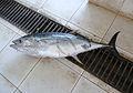 Sur-Fish market (6).jpg