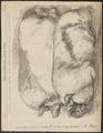 Sus scrofa domestica - 1865 - Print - Iconographia Zoologica - Special Collections University of Amsterdam - UBA01 IZ21900133.tif