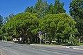 Svetogorsk PobedyStreet 007 0503.jpg
