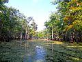 Swamp in Slidell.jpg