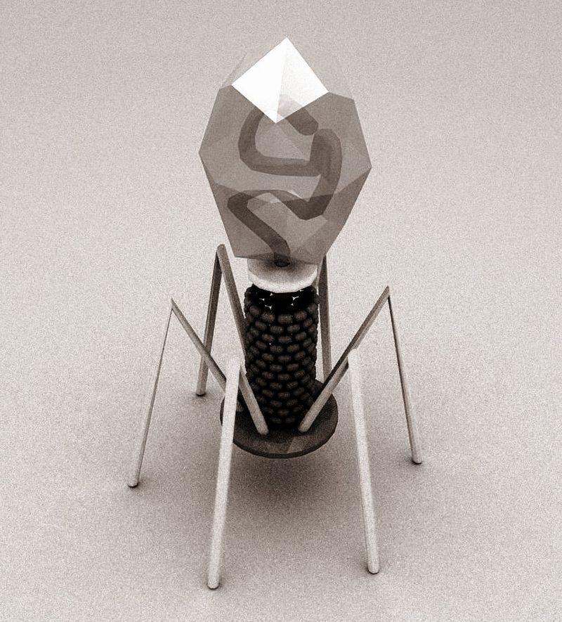 Bakteriofag T4 - model