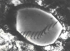 TEM micrograph dislocations precipitate stainless steel 1.jpg