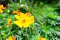 Taman Begonia.jpg