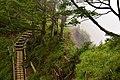 Tanzawa's trail (49442626272).jpg