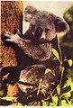 Taronga Park Zoo (27087270465).jpg