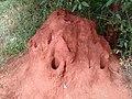 Termite Hill in Tamilnadu.jpg