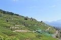 Terrasses de Lavaux - panoramio (38).jpg
