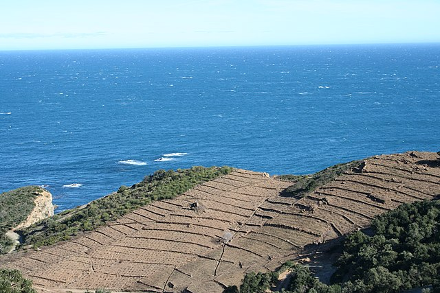 Terroir d'un vignoble de l'appellation Collioure