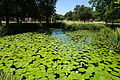 Texas Woman's University September 2015 45 (lily pond).jpg