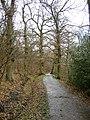 The Beech Walk, The Vyne Estate, Sherborne St John - geograph.org.uk - 147801.jpg