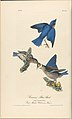The Birds of America from Drawings Made in the United States MET DP245254.jpg
