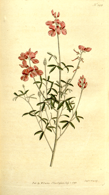 The Botanical Magazine, Plate 198 (Volume 6, 1793).png