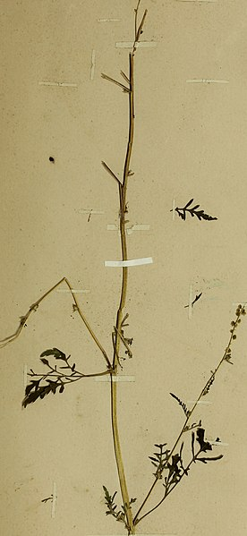 File:The British farmer's plant portfolio - specimens of the principal British grasses, forage plants and weeds - with full descriptions (1896) (14593594188).jpg