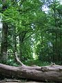 The Lime Avenue - Salcey Forest - July 2009 - panoramio.jpg