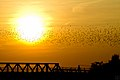The Swarm and the Sun (6183852559).jpg