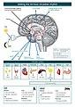 The master circadian clock in the human brain.jpg