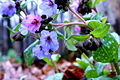 This purple flower.JPG