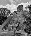 Tikal Temple 2 (3746465407).jpg