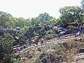 Tirumala, Tirupati, Andhra Pradesh, India - panoramio (4).jpg
