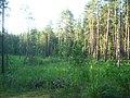 Tomsky District, Tomsk Oblast, Russia - panoramio (92).jpg