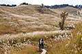 Tonomine highland Kamikawa Hyogo pref Japan05bs3.jpg