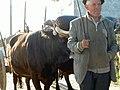 Trabalhos rurais - panoramio.jpg