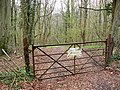 Track into Gatcombe Wood - geograph.org.uk - 773966.jpg