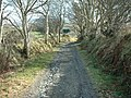 Track leading to The Rhyne near West Baldwin - geograph.org.uk - 444415.jpg