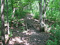 Trail near Young Park - panoramio.jpg
