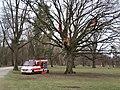 Training firefighters in a tree - Nuremberg Feuerwehr.jpg