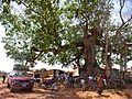 Tree near Sanniquelle (33020009660).jpg