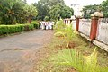 Tree planting in Thrissur Town Hall-3.jpg