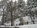 Trees covered with snow.JPG