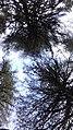 Trees scattered.jpg