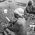 Tri des huîtres par les cueilleuses traditionnelles d'huîtres de mangrove, Sine Saloum, femmes du village de Soucouta, Sénégal.jpg