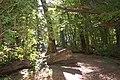Tricity landscape park.jpg