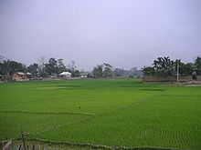 Green paddy field with a few huts at a distance