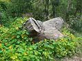 Tronco entre hojas - panoramio.jpg