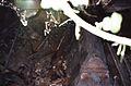 Trumna (coffin), Buk 04.1992r.jpg