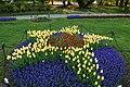 Tulip Star in Washington Park.jpg