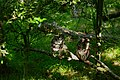 Two-owls-perched-branch - West Virginia - ForestWander.jpg