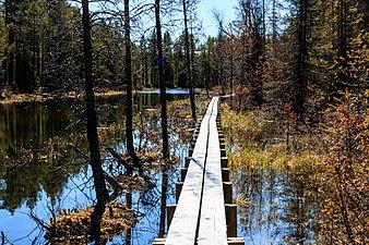 Tysjöarnas naturreservet 170513 02.jpg