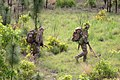 U.S. Army scout snipers shift their position during a field training exercise with the Indian Army in 2013.jpg