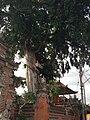 Ubud, Gianyar, Bali, Indonesia - panoramio (3).jpg
