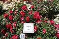 Una rosa alemana gana el concurso internacional 'Villa de Madrid' 08.jpg