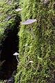 Unidentified Fungi 5917.jpg