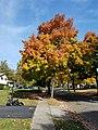 Upper Arlington, Ohio (30918069722).jpg